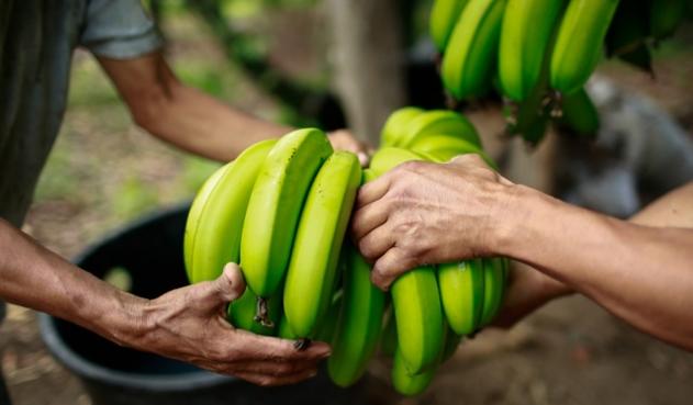 Gobierno lanzó pacto para reinventar el agro en Arauca